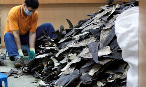 Shark fins set out to dry at a facility in Hong Kong.
