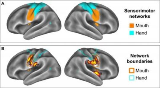 Regions of the brain that are stimulated by food commercials (Image courtesy of Kristina Rapuano).