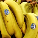 A fungus threatens the existence of bananas. (Image courtesy of Amy Sancetta/AP Photos)