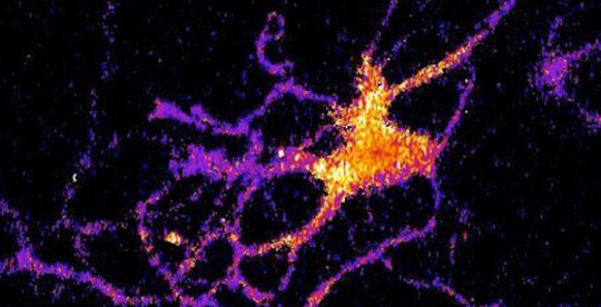 Individual neuron glowing with bioluminescent light produced by a new genetically modified sensor. Credit: Johnson Lab